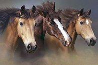 """Предпросмотр схемы вышивки  """"тройка """". тройка, лошади, предпросмотр."""