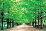 1000ピース 新緑の並木道(東京)