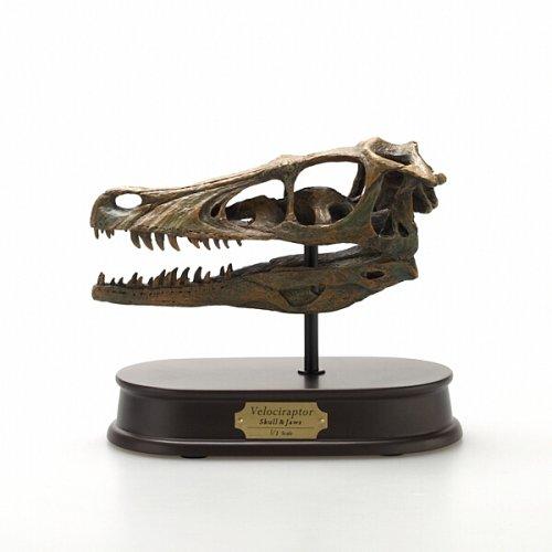 Velociraptor Skull (Kinto)