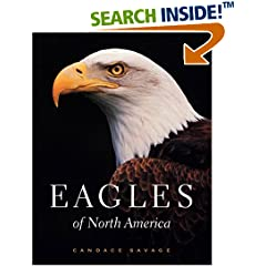 Eagle Photos of North America