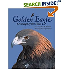Golden Eagle Pictures and Info