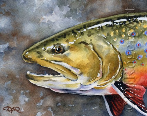 Brook Trout Print by DJ Rogers