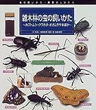 雑木林の虫の飼いかた―カブトムシ・クワガタ・オオムラサキほか