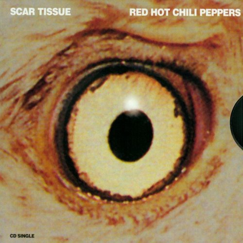 Red Hot Chili Peppers - scar tissue (acoustic) - Zortam Music