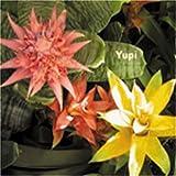 Pochette de l'album pour Yupi