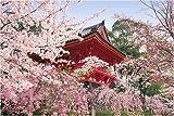 1000ピース 桜咲く仁和寺-京都 10-589S