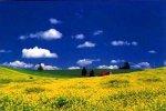 1000ピース 菜の花と大地(北海道・美瑛)