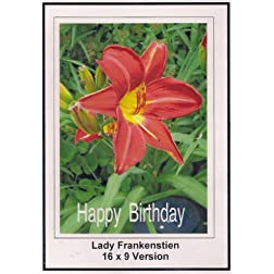Lady Frankenstien: 16x9 Widescreen TV.: Greting Card: Happy Bithday