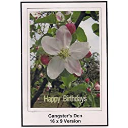 Gangster's Den; 16x9 Widescreen TV.: Greeting card: Happy Birthday