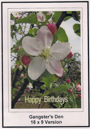 Gangster's Den; 16x9 Widescreen TV.: Greeting card: Happy Birthday