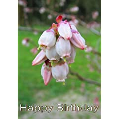 Angel And The Badman: Widescreen TV.: Greeting Card: Happy Birthday