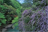 1000ピース 藤咲くかずら橋-徳島 10-653