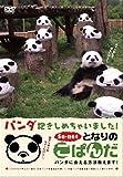 となりのこぱんだ パンダ抱きしめちゃいました ~パンダに会える方法教えます~