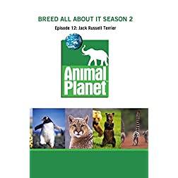 Breed All About It Season 2 - Episode 12: Jack Russell Terrier