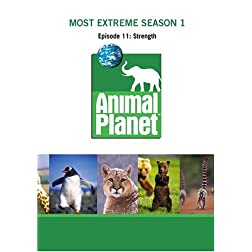Most Extreme Season 1 - Episode 11: Strength