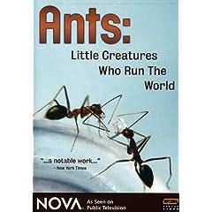 NOVA: Ants - Little Creatures Who Run the World
