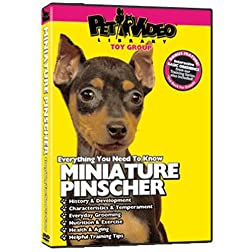 MINIATURE PINSCHER DVD + Dog & Puppy Training