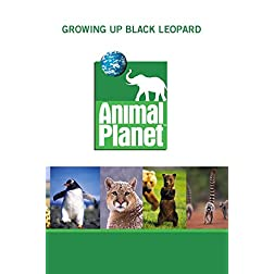 Growing Up Black Leopard
