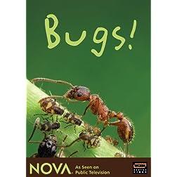 NOVA: Bugs