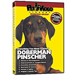 DOBERMAN PINSCHER DVD! Includes Dog & Puppy Training Bonus