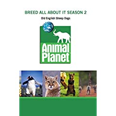 Breed All About It Season 2 - Old English Sheep Dogs