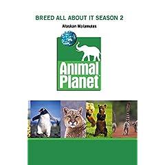 Breed All About It Season 2 - Alaskan Malamutes