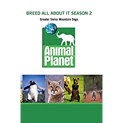 Breed All About It Season 2 - Greater Swiss Mountain Dogs