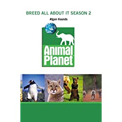 Breed All About It Season 2 - Afgan Hounds