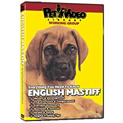 ENGLISH MASTIFF DVD! + Dog & Puppy Training Bonus