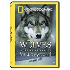 Wolves: A Legend Returns to Yellowstone