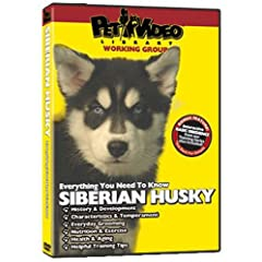 SIBERIAN HUSKY DVD! Includes Dog & Puppy Training Video