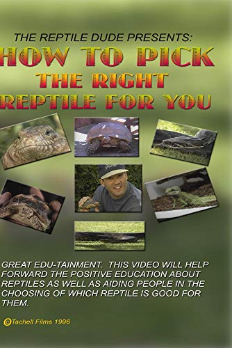 How To Pick The Right Reptile For You