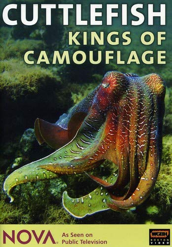 NOVA: Cuttlefish - Kings of Camouflage