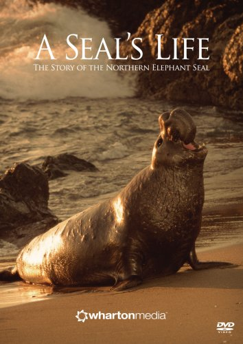 A Seal's Life - The Story of the Northern Elephant Seal