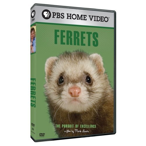 The Pursuit of Excellence: Ferrets