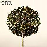 album art to Cartel