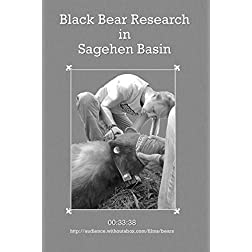 Black Bear Research in Sagehen Basin
