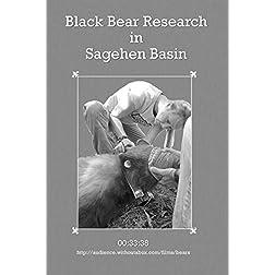 Black Bear Research in Sagehen Basin