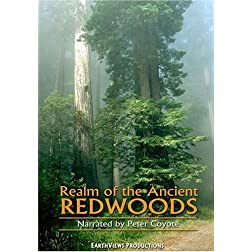 Realm of the Ancient Redwoods