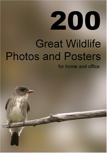 200 Great Wildlife Photos and Posters