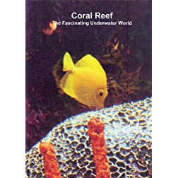 Relaxation: Coral Reef (The Fascinating Underwater World)