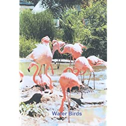 Water Birds (Relaxation)
