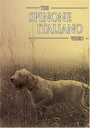 The Spinone Italiano