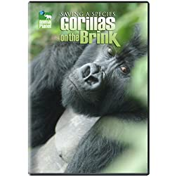 Saving a Species: Gorillas on the Brink