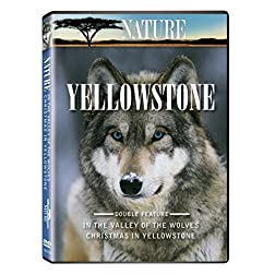 Nature: Yellowstone