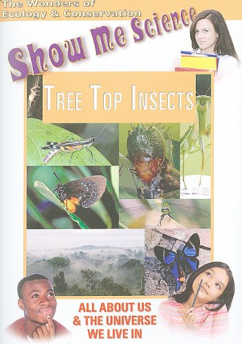 Tree Top Insects
