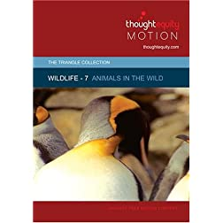 Wildlife 7 - Animals in the Wild