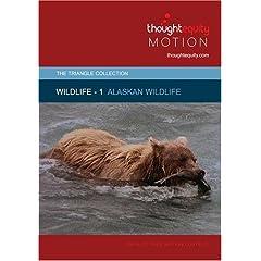 Wildlife 1 - Alaskan Wildlife (Royalty Free Motion Video)
