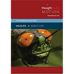 Wildlife 4 - Insect Life
