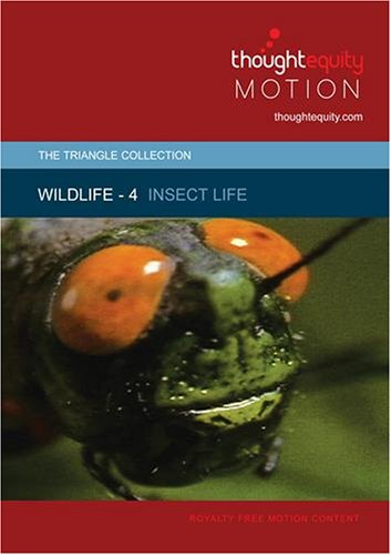 Wildlife 4 - Insect Life (Royalty Free Motion Video)